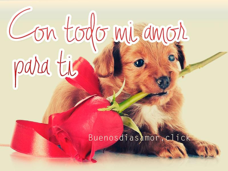 cachorro frase de amor con rosacachorro frase de amor con rosa