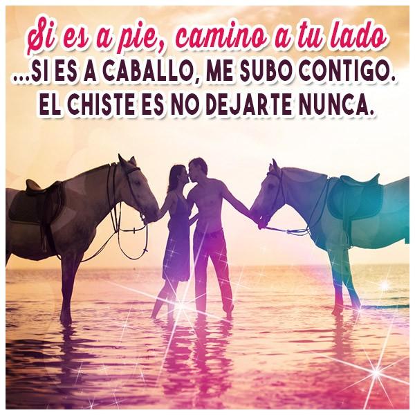 fotos de caballos con frases de amor imagui imagenes de