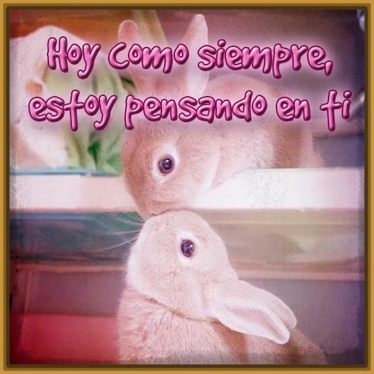 Imagenes De Conejos Con Frases De Amor
