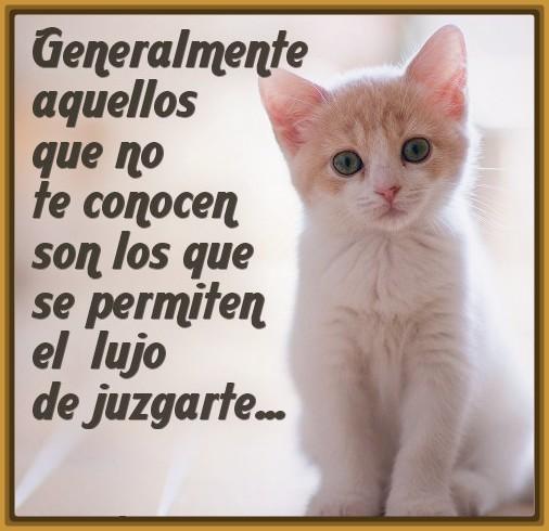Imagenes Tiernas De Gatos Con Frases